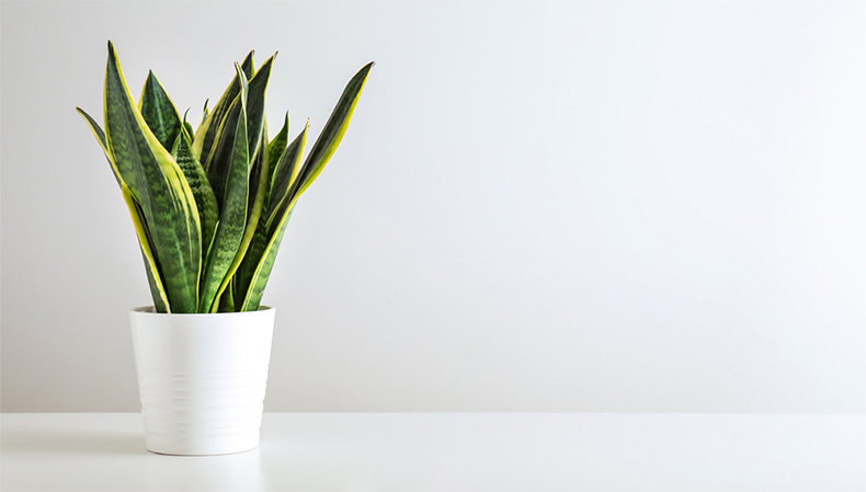 snake-bathroom-plant